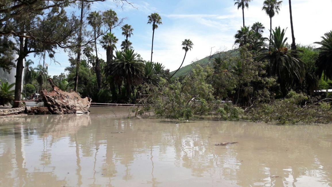 A oso eucalipto cay sobre lago del parque salta fm 89 - Informacion sobre el eucalipto ...