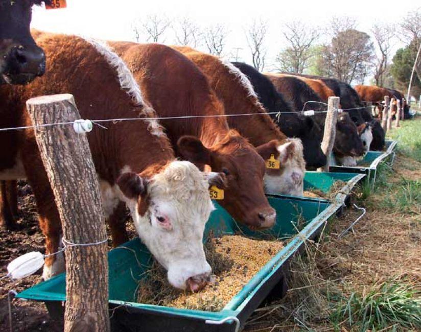 El 70% de la carne que se consume en Salta se importa de otras provincias