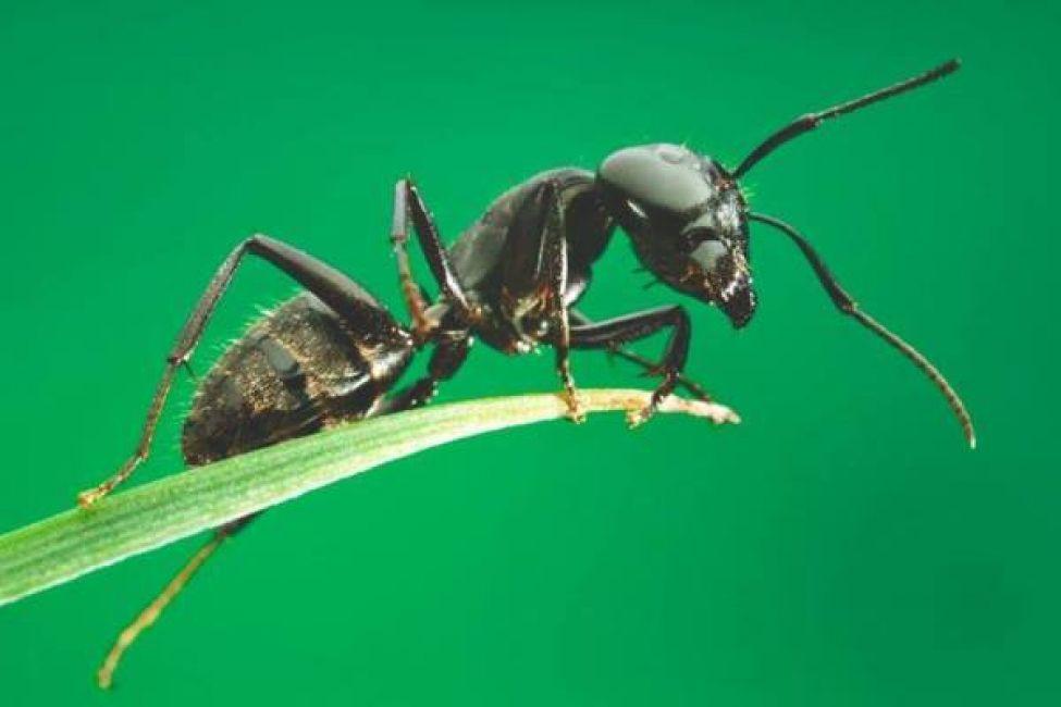 Un bi logo argentino predice el clima estudiando hormigas for Hormigas en el jardin
