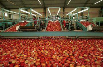 Argentina volverá a exportar peras, manzanas y membrillos a la India