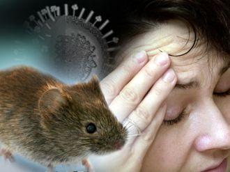 Orán es el lugar que más casos de hantavirus reporta en toda América