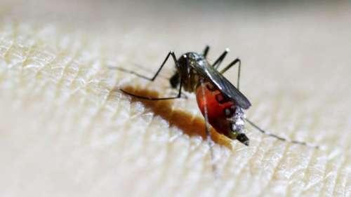 Confirman el primer caso de zika en Mendoza