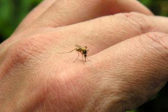 Salta alerta por el riesgo del Chikungunya