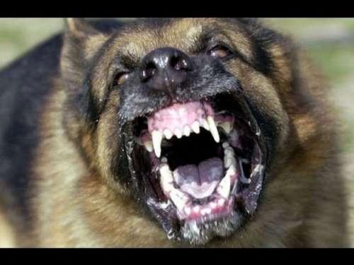En Tucumán hubo tres muertos por ataques de perros en los últimos años