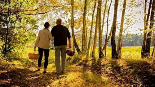 Logran revertir los síntomas del Alzheimer y el Parkinson