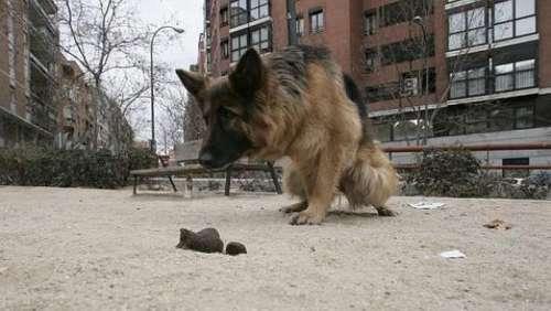 Advierten que la caca de perros y gatos en las veredas es peligrosa para la salud