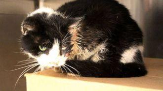 Este gato de verdad tiene 7 vidas: salió caminando de su tumba...