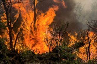 Logran contener el incendio de bosques nativos en Cholila
