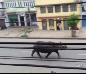 Nepal: un rinoceronte salvaje mató a una mujer y dejó varios heridos