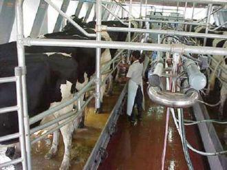 Los productores agropecuarios en caída libre