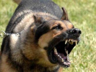 Una mujer fue atacada por un perro