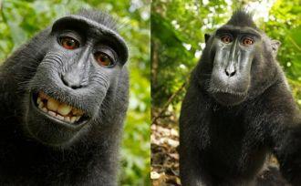 """Los animales """"fotógrafos"""" podrán ganar dinero por sus imágenes"""